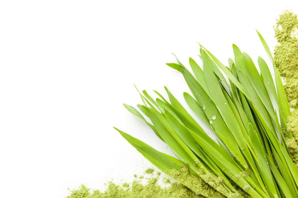 KXhealthproducts - grass powder - leaf