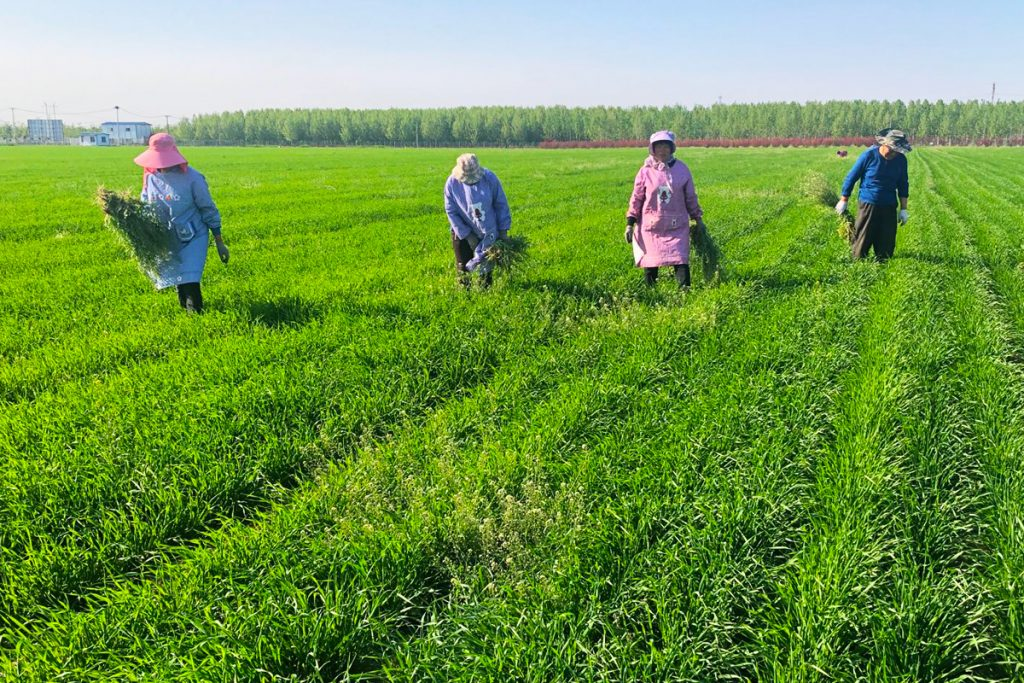 KXhealthproducts - grass powders - grass fields